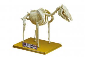 "Sciene Time Сборная модель ""Скелет Лошади"""