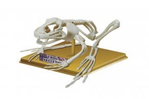"Sciene Time Сборная модель ""Скелет Лягушки"""
